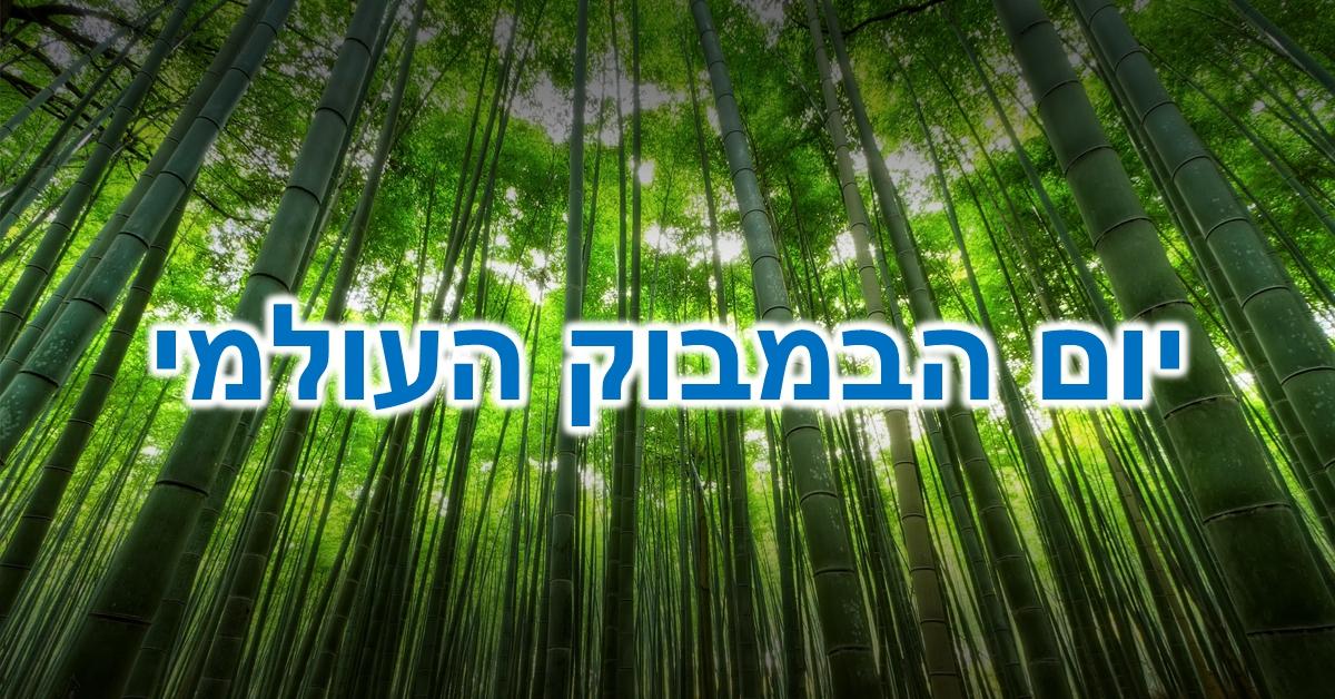 יום הבמבוק העולמי: יער של גזעי במבוק ענקיים שעושה לכם ירוק בעיניים :)